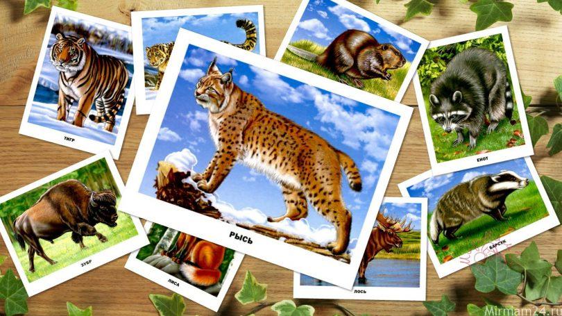"""Картинки для детей """"Лесные животные"""""""
