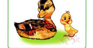 """Картинки для детей """"Утка и утенок"""""""