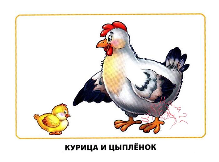 """Картинки для детей """"Курица и цыпленок"""""""