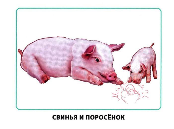 """Картинки для детей """"Свинья и поросенок"""""""