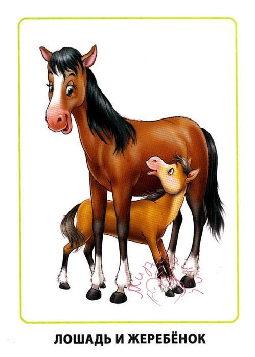 """Картинки для детей """"Лошадь и жеребенок"""""""