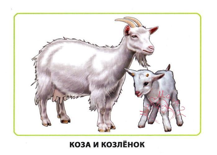 """Картинки для детей """"Коза и козленок"""""""