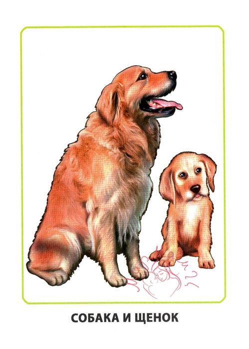 """Картинки для детей """"Собака и щенок"""""""