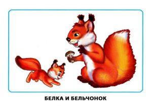 """Картинки для детей """"Белка и бельчонок"""""""