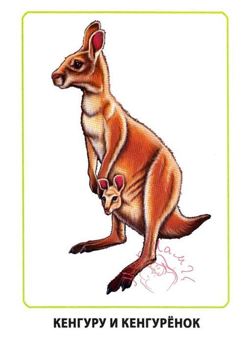 "Картинки для детей ""Кенгуру и кенгуренок"""