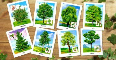"""Картинки для детей """"Деревья"""""""
