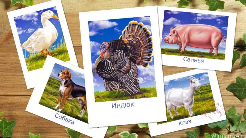 """Картинки для детей """"Домашние животные"""""""