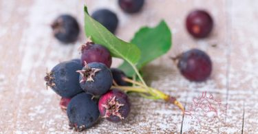 Ирга - полезные свойства чудо-ягоды